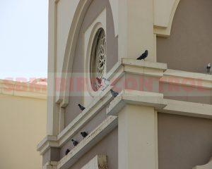 Nad Al Shebha by SBM Bird Control