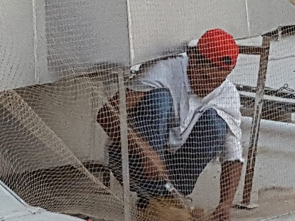 SBM Bird Control Team installs Bird Netting