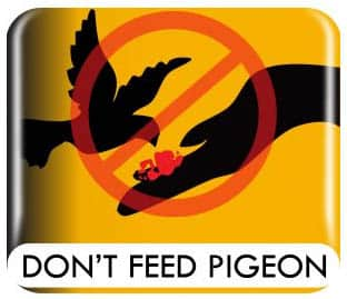 don't feed pigeon